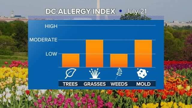 Allergy-Pollen